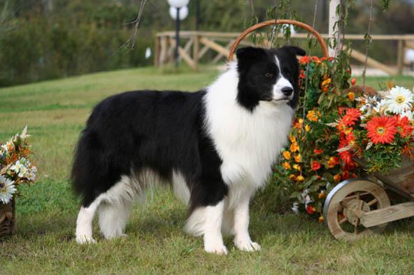 Cani Piccolissimi Da Appartamento: Cani piccolissimi da appartamento adozione cane cuccioli jack ...